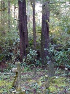 Nature encroaches on Morpheus Island's cemetery